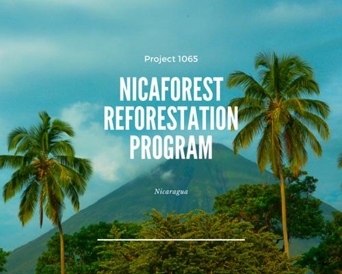 nicaforest-rainforest-program